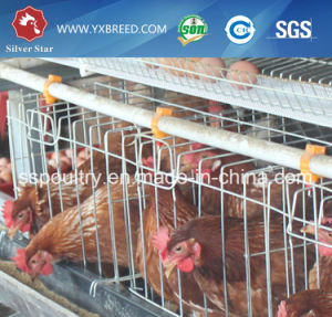 Open House Automatic Chicken Laying Hen Battery Cage System Equipments pictures & photos