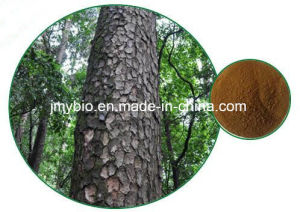 100% Natural Pine Bark Extract with 95% Proanthocyanidins pictures & photos