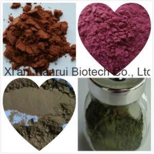 Bulbus Lilii Extract /Lilium Brownii Extract/Lily Extract /Lily Bulb Extract pictures & photos
