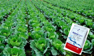 The Best Price of Pesticide Fungicide Propiconazole 95%Tc, 25%Ec pictures & photos