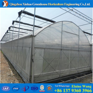 Promotion 2017 Hot Sale Multispan Plastic Film Greenhouse for Strawberry pictures & photos