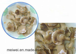 Canned Abalone Oyster Mushroom Hot Selling pictures & photos