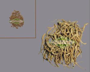 Flos Lonicerae Plant Extract Granule