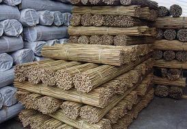 Bamboo Stick Stake