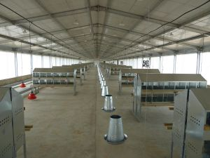 Pre-Engineered Structure Chicken House (SSW-14345) pictures & photos