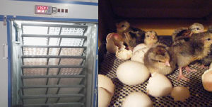 Holding 4224 Eggs Chicken Incubator Hatchery Machine pictures & photos