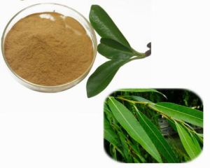 Skin Care Salicin 15%- 98% White Willow Bark Extract pictures & photos