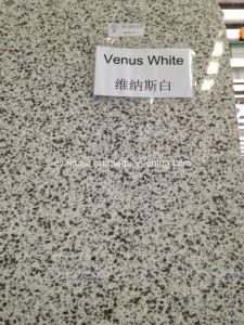 Natural Stone Nenus White Granite Slab for Kitchen Countertop/Vanity Top
