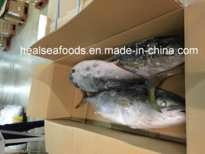 Sea Frozen Yellow Tail Scad Fish with Size 7/8kg pictures & photos