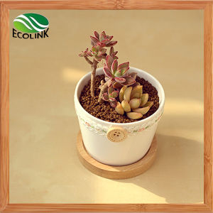 Country Style Ceramic Succulent Pot with Baboo Stand pictures & photos