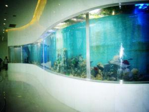 Customized Various Acrylic Fish Tanks/Aquarium pictures & photos