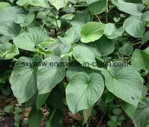 Natural High Quality 30% 50% Kavalactones Kava Extract pictures & photos