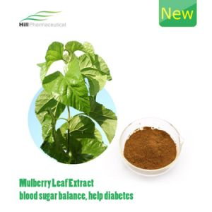 2016 New Mulberry Leaf Extract