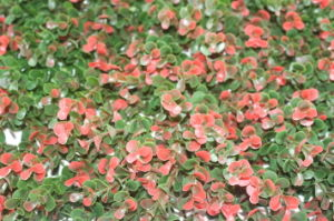 Highly Artificial Landscape Leaves Balcony Fence (MZ188003E) pictures & photos