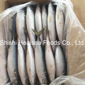 Good Quality Land Frozen Fish Mackerel 250-350g pictures & photos