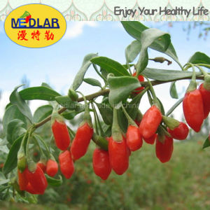 Medlar Sun Cure Red Dried Goji pictures & photos