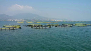 HDPE Fish Farming Floating Cage Aquaculture pictures & photos