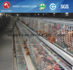 New Broiler a Type Layer Chicken Cages for Poultry House pictures & photos