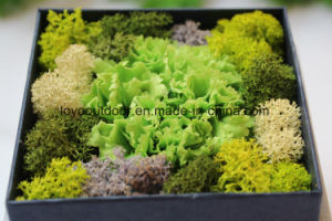 Preserved Natural Carnation Mother, S Day Gift pictures & photos