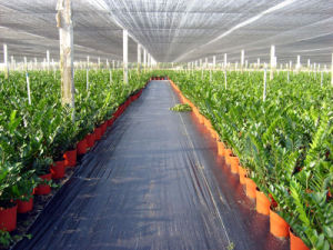 Agriculture Green House Roof Sun Shade Cloth with UV pictures & photos