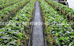 Black PP Woven Silt Fence for Garden pictures & photos