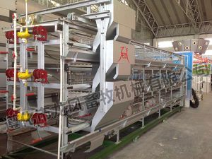 Automatic Rearing Layer Cage for Poultry Equipment pictures & photos