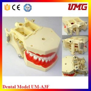 Teeth and Dental Models for Medical pictures & photos