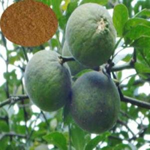 Citrus Aurantium Extract/Synephrine (6%-98%) pictures & photos