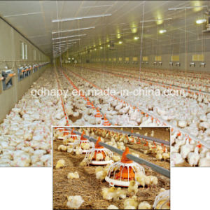 Professional Designed Poultry Feeding Equipment for Broiler and Chicken pictures & photos