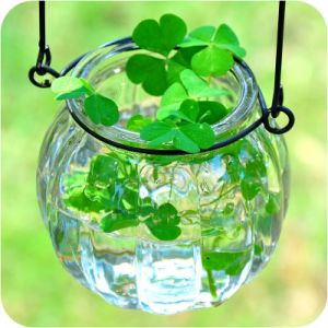 Glass Jar/Plants Container/Hanging Jar pictures & photos