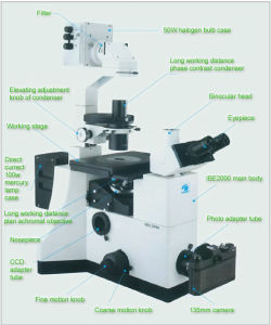 Inverted Fluorescent Microscope (IBE2000 Series) pictures & photos