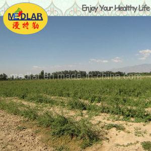 Medlar Lbp Ecocert Certificate Dried Goji