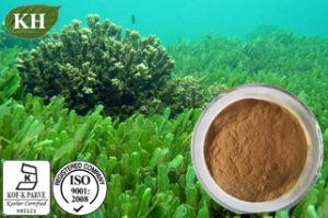 High Natural Protein 60%, 65% Spirulina Powder pictures & photos