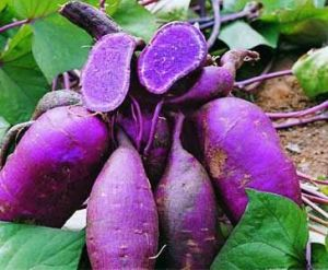 Purple Sweet Potato Extract, Anthocyanin Glucoside pictures & photos