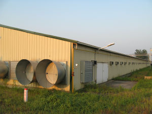 Chicken Farm Shed Design for Broiler pictures & photos