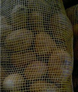 New Crop Fresh Potato for Bangladesh Market pictures & photos