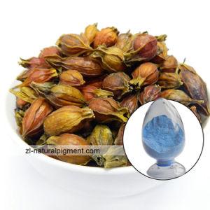 Gardenia Blue - Cape Jasmine Blue pictures & photos
