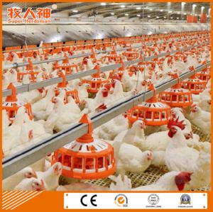 Chicken House Farm china customized poultry farm equipment in chicken house with good