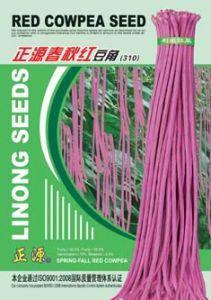 Chun Qiu Hong Cowpea Seeds310