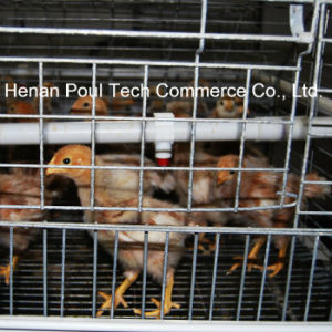 Poul Tech Pullet Chicken Cage pictures & photos