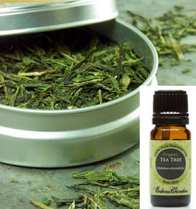 Private Label Organic Green Essential Tea Oil pictures & photos