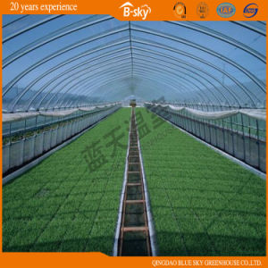Tunnel Green House for Vegetable Planting China Supplier pictures & photos
