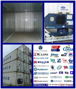 Reefer Container Consolidateshipping Service From China to South America pictures & photos