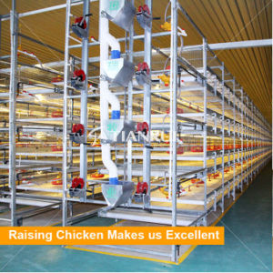 Tianrui Design H Type Good Quality Automatic Chicken Broiler Cage System pictures & photos