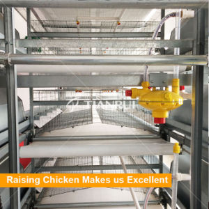 Automatic PP Belt End Poultry Manure Removing System for Chicken House pictures & photos