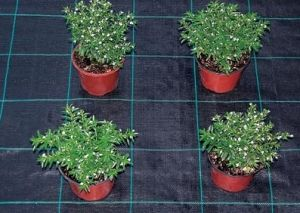 PP Woven Ground Cover Weed Barrier pictures & photos