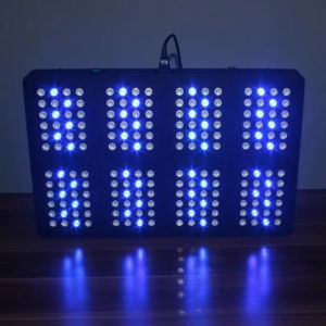 Neptune 8 Series 576W LED Plant Grow Light for Indoor pictures & photos