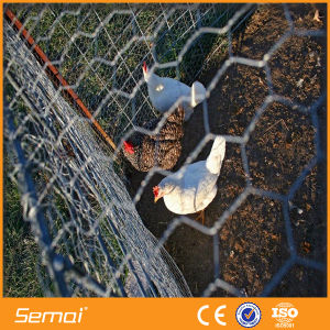 Hexagonal Wire Mesh/Chicken Wire Mesh pictures & photos