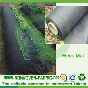 PP Nonwoven Fabric for Plant Keepping Warm in Agriculture pictures & photos