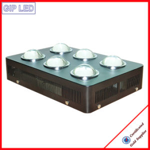 Big Irradiation Area 756W COB LED Grow Lights pictures & photos